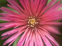 Makrofoto från lite blomman Royaltyfri Fotografi