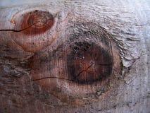Makrofoto med en abstrakt modell av trädskället Royaltyfri Fotografi