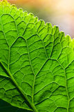 Makrofoto med grön bladyttersida Royaltyfria Bilder