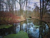 Makrofoto med landskapbakgrund av den första vårmarsdagen i en parkera Royaltyfria Bilder