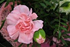 Makrofoto mit einem dekorativen Hintergrund Anlagen einer von den schönen rosa Blumengartennelke für die Landschaftsgestaltung, B stockbild