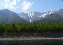 Makrofoto mit einem dekorativen Hintergrund der europäischen Landschaft der Boden des Reliktwaldes auf dem Ufer vom Baikalsee Stockfotografie