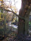 Makrofoto mit Landschaftsherbsthintergrund mit der Aussicht von einem ländlichen Fluss und von Bäumen Stockbilder