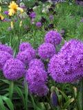 Makrofoto mit runden hellen Blüten eines dekorativen Beschaffenheitshintergrundes blüht, dekorative Bögen das Gartenlandschaftsde Lizenzfreie Stockfotos