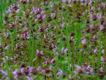 Makrofoto mit wilden wilden Blumen eines dekorativen Beschaffenheitshintergrundes von krautigen Pflanzen Lizenzfreies Stockbild