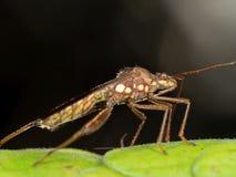Makrofoto von Brown-Insekt auf grünem Blatt, selektiver Fokus an ihm stockfotos