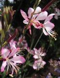 Makrofoto von weiche rosa Blütenpflanzen für die Gartenarbeit stockbilder