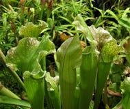 Makrofotoet med dekorativ bakgrund av tropiska växter blommar rovdjur Royaltyfri Fotografi