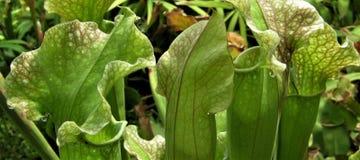 Makrofotoet med dekorativ bakgrund av tropiska växter blommar rovdjur Arkivbilder