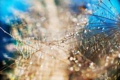 Makrofotografi av maskrosor med droppar av vatten eller dagg i mång--färgade signaler Arkivfoton