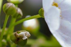Makrofotografi av mycket små blommaknoppar fotografering för bildbyråer