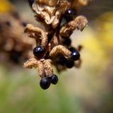 Makrofotografi från naturmicroskönhet Arkivfoto