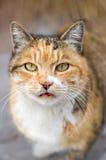 Makrofotographien-Katze Lizenzfreies Stockbild