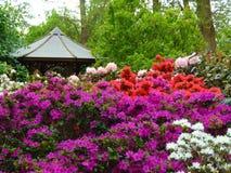 Makrofotos von schönen Blumen mit den Blumenblättern von purpurroten, rosa, weißen Farben auf den Niederlassungen von Bush des Rh Lizenzfreie Stockfotografie