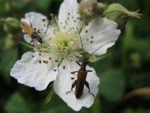 Makrofotos von wilden Blumen und von Insekten als der Quelle für Design, Druck Stockbilder
