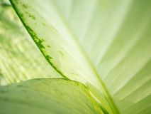 Makrogräsplansidor är bakgrund arkivfoton