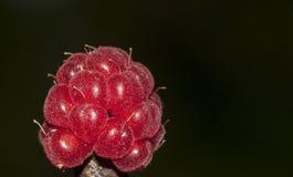 Makrohallon Royaltyfria Bilder