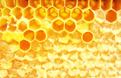 Makrohineycomb med honung Royaltyfria Bilder