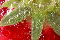 makrojordgubbevatten fotografering för bildbyråer
