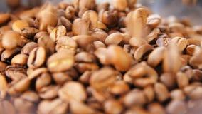 Makrokaffekorn lägger, och guld- bönor faller ner lager videofilmer
