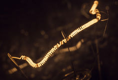 Makrolampa Royaltyfria Foton