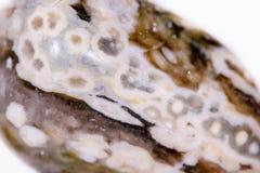 Makromineralsteinjaspis ozeanisch auf einem weißen Hintergrund stockbild