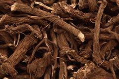 Makronahaufnahme der organischen Wurzel des gemeinen Kalmus (Acorusgemeiner kalmus) Lizenzfreie Stockbilder