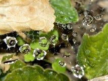 Makronahaufnahme von Regentropfen im Netz Lizenzfreie Stockbilder