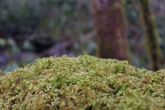 Makronaturfotografi av Moss Covering en sten i skogen Royaltyfria Foton