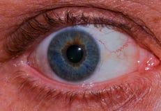 Makrophotographie eines menschlichen Auges mit vielen Details Lizenzfreie Stockbilder