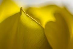 Makrophotographie von Tulpenblumenblättern Lizenzfreies Stockfoto
