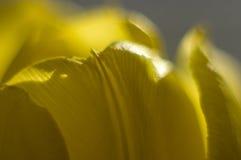 Makrophotographie von Tulpenblumenblättern Lizenzfreie Stockbilder