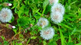 Makroschüsse: mein Garten Lizenzfreies Stockbild