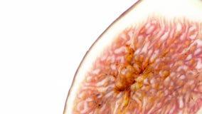 Makroschießen des Fruchtblitzes der allgemeinen Feige Langsam, drehend auf die Drehscheibe lokalisiert auf dem weißen Hintergrund stock video footage