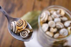 Makroschnecken und Löffel Stockbild