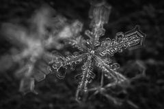 Makroschneeflocke Schwarzweiss-4 Stockbild