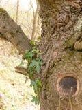 Makroschuß der Baumrinde im Frühjahr und des Sommer-Lichtes Stockfotografie