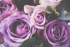 Makroschuß der frischen rosa Rosen, Sommer blüht, Weinleseart Lizenzfreie Stockfotos