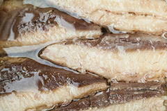 Makrele beint Makro aus stockfoto