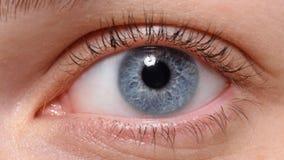 Makroschuß des blauen Auges mit Make-up Stockbild
