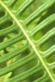 Makroschuß des grünen Blattes Stockbild