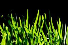 Makroschuß des grünen Grases Stockbilder