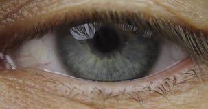 Makroschuß des männlichen menschlichen Augenblinkens des blauen Graus stock video