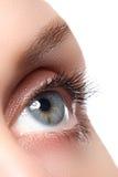 Makroschuß des schönen Auges der Frau mit den extrem langen Wimpern stockbilder