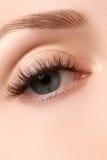 Makroschuß des schönen Auges der Frau mit den extrem langen Wimpern Sexy Ansicht, sinnlicher Blick Weibliches Auge mit den langen Lizenzfreie Stockbilder