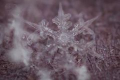 Makroschuß gefrorener Schneeflocke 6 lizenzfreie stockfotografie