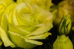 Makroschuß von Blumen - stieg Lizenzfreies Stockfoto