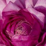 Makroschuß von Blumen - stieg Lizenzfreies Stockbild