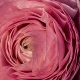 Makroschuß von Blumen - stieg Lizenzfreie Stockfotos