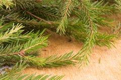 Makroschuß von Weihnachtsbaumasten mit grünen Nadeln Lizenzfreie Stockfotografie